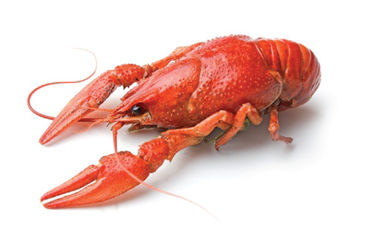 SCCL opens the business season with the Crayfish Party